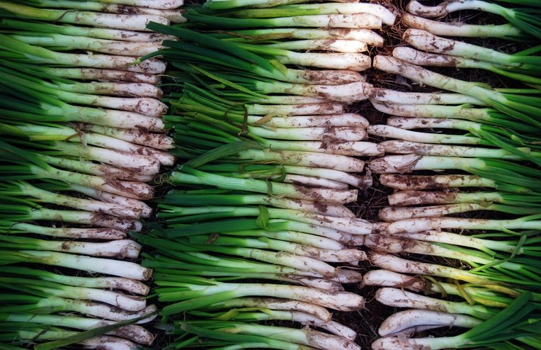 This Spring Onion Festival Is the Best Way to Experience Barcelona