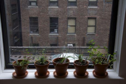 Help Us Save Our Windowsill Herb Garden