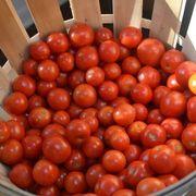 87ac0b14 87e6 4a76 b792 998e5ba9b7e7  cherry tomatoes