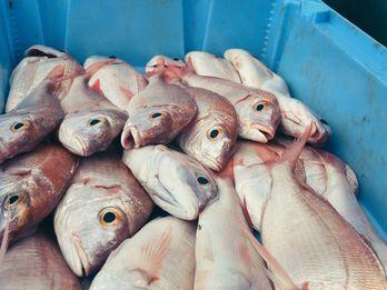 Inside La Lonja, Barcelona's Last Local Fish Market