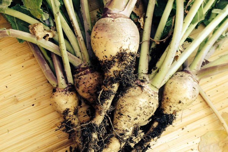 Turnip Vichyssoise