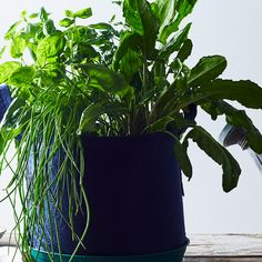 5 Steps to Mini Garden Success (Even If You're Not Great at Growing Things)