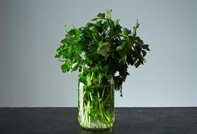 003e0e23 1626 4a74 a12d 618d7d11bde8  2013 1107 storing fresh herbs 013