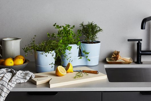 How to Grow Herbs Indoors Even If You've Never Grown Anything