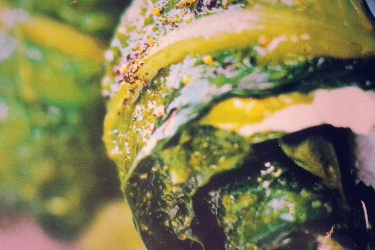 Corsican lettuce nems