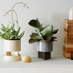 How to Keep Your Plants Alive (& Thriving!) All Summer Long
