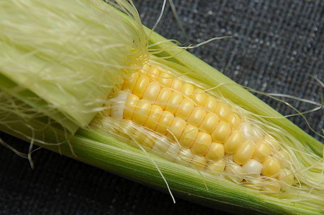 Corn Recipe Contest