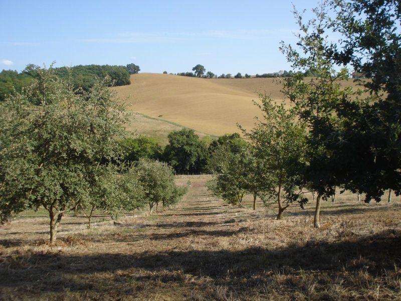 Truffle field
