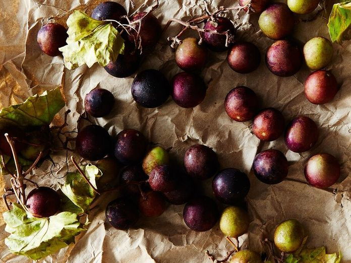 Have You Been Missing Out on Muscadines?