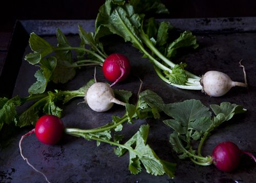 Your Best Radishes or Turnips