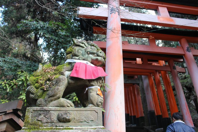 On Mount Inari, above the Fushimi Inari Taisha shrine.