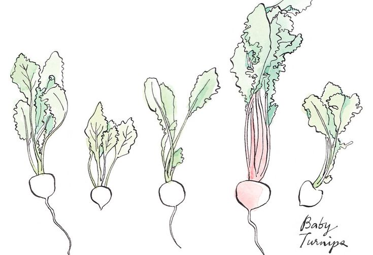 A Summer Salad Two-Step, Illustrated